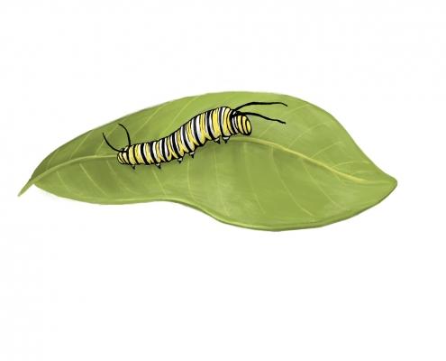 Monarch Caterpillar by Priscilla Alpaugh